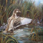Canard dans le marais 20 po x 16 po Huile sur toile
